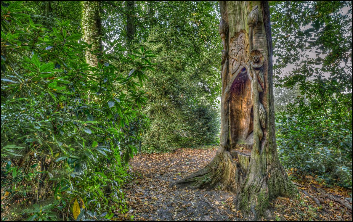 Фото бесплатно парк, дорога, деревья, природа, пейзажи