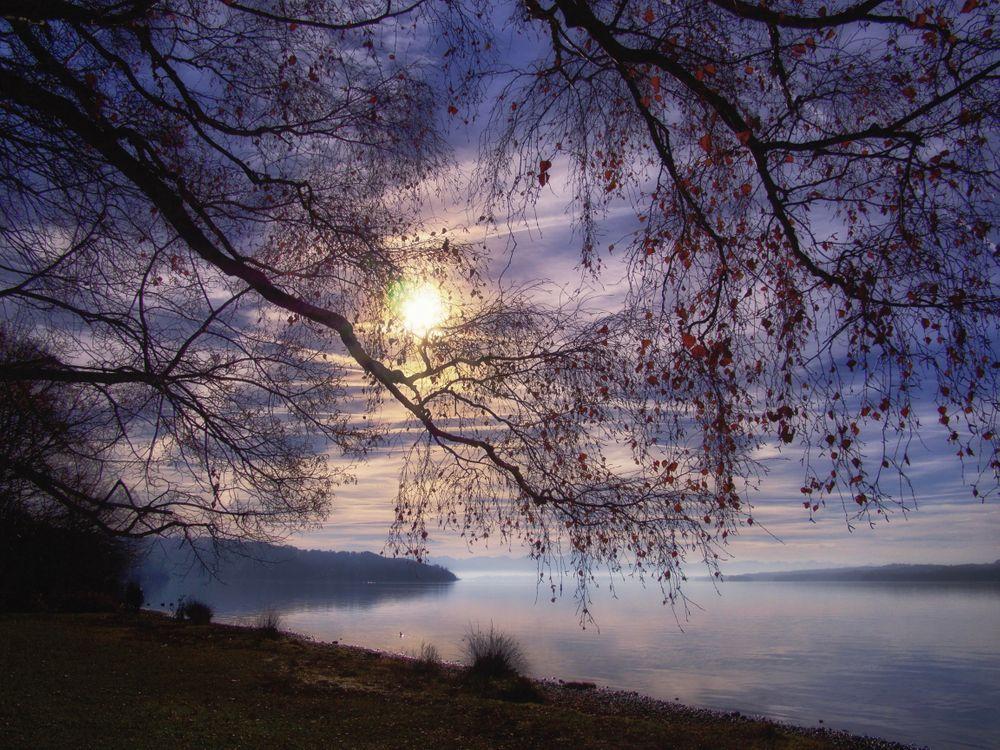 Фото бесплатно Штарнбергское озеро, Германия, Бавария, закат, деревья, туман, пейзаж - на рабочий стол