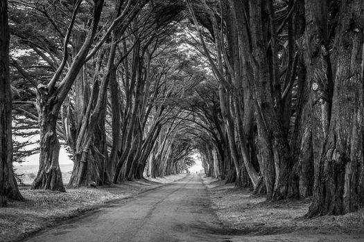 Фото бесплатно дорога, черно-белый, парк