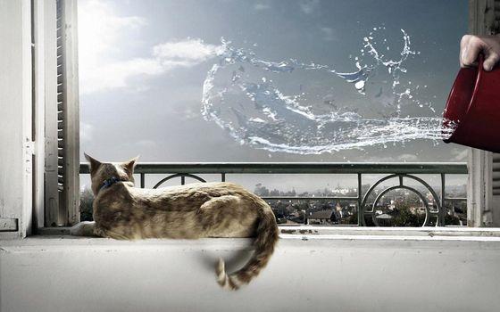 Photo free cat, lying, window sill