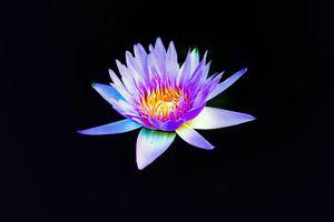 Фото бесплатно водяная лилия, протеалочки, лили
