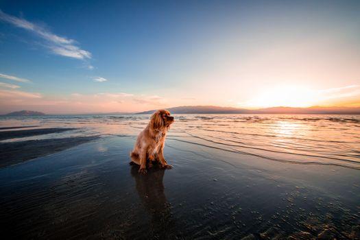 Фото бесплатно собака, утро, пляж