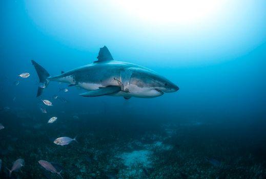 Фото бесплатно вода, акулы, морские обитатели