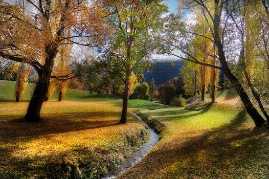 Photo free New Zealand, Autumn, trees