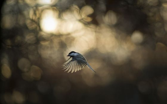 Photo free sun light, nature, reflection
