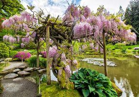 Обои японский сад, парк, пруд, деревья, камни, пейзаж