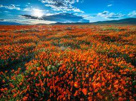 Photo free nature, flower, California