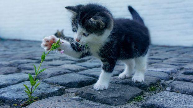 Photo free cute kitten, playful, paws