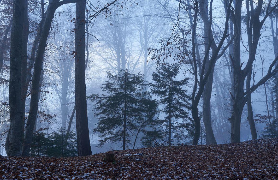 Заставка туман, деревья