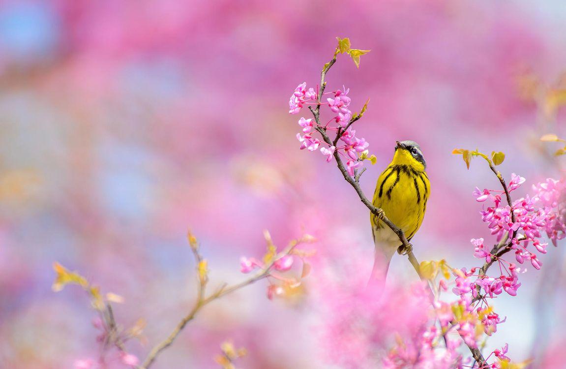 Фото бесплатно ветка, цветы, птица, Камышевка магнолии, птицы