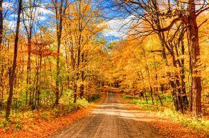 Заставки осень,дорога,лес,парк,деревья,пейзаж