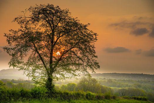 Photo free sunset, hills, tree