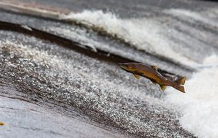 Фото бесплатно парящая рыба, течение, река