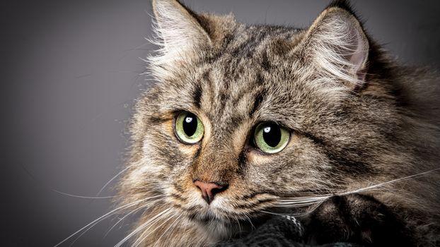 Photo free cat, cute, close