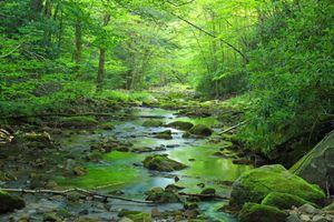 Фото бесплатно Пенсильвания, деревья, лес