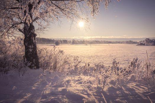 Photo free nature, tree, winter