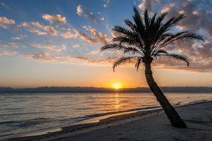 Бесплатные фото закат,море,берег,пальма,пляж,пейзаж