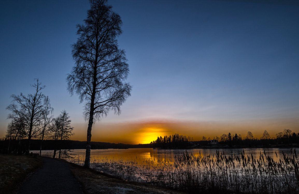 Фото бесплатно река, деревья, силуэты - на рабочий стол