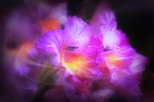 Photo free gladiolus, flowers, flower