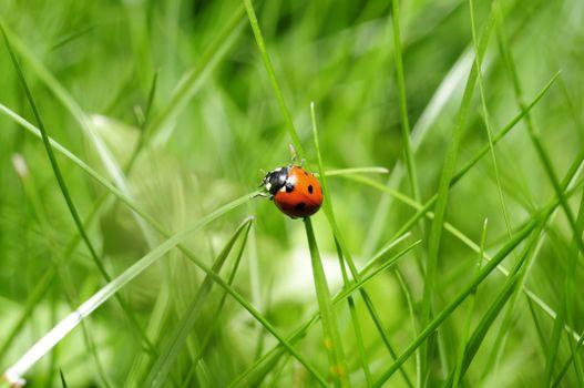Photo free fauna, close-up, ladybug