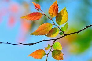 Бесплатные фото осень,ветка,листья,природа