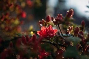 Фото бесплатно природа, красный, растения