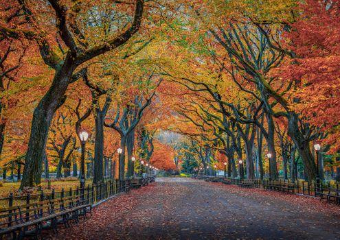 Фото бесплатно парк, осень, New York City