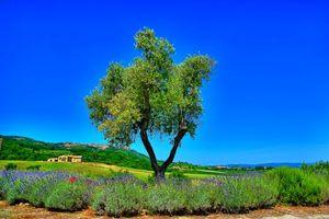 Бесплатные фото поля,холмы,дерево,дома,Монтальчино,Италия