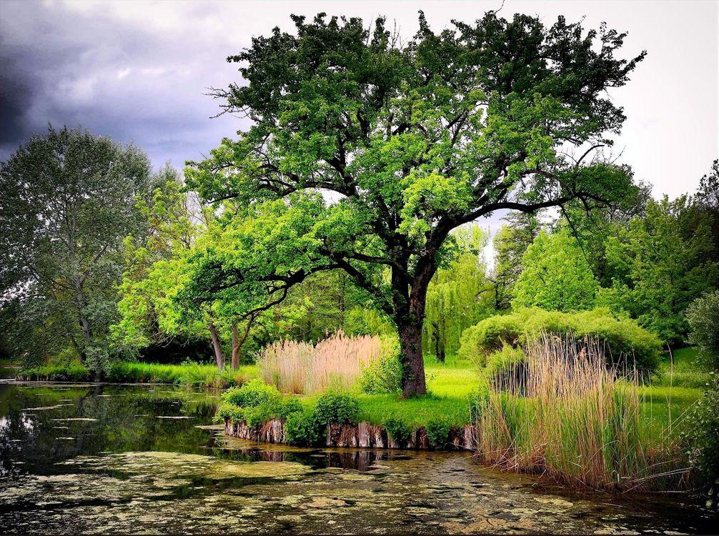 Фото бесплатно река, берег, лес, деревья, приорода, природа