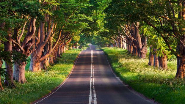 Заставки пейзаж зеленый, летние деревья, листва