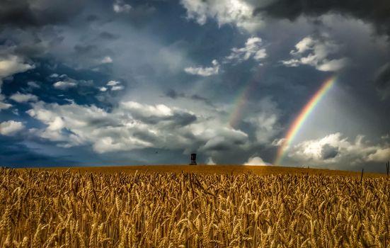 Фото радуга на пшеничном поле