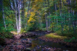 Бесплатные фото осень,лес,река,деревья,камни,природа,пейзаж