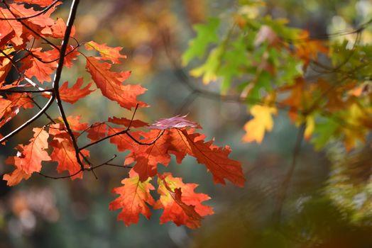 Photo free autumn leaves, autumn, macro