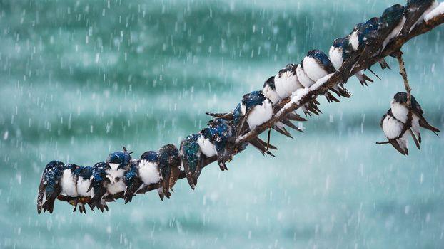 Photo free birds, snow, winter