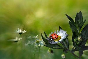 Бесплатные фото божья коровка,цветок,макро