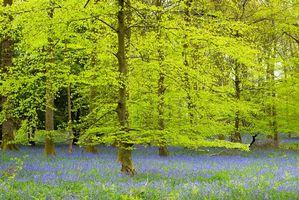 Бесплатные фото лес,деревья,природа,цветы,пейзаж