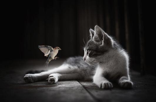 Фото бесплатно портрет, кошка, воробей