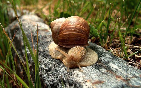 Photo free snail, shell, crawl