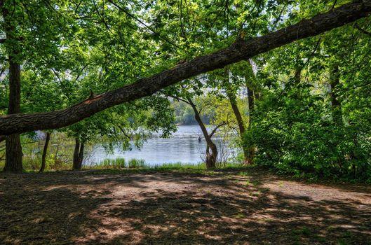 Photo free trees, landscape, Ukraine