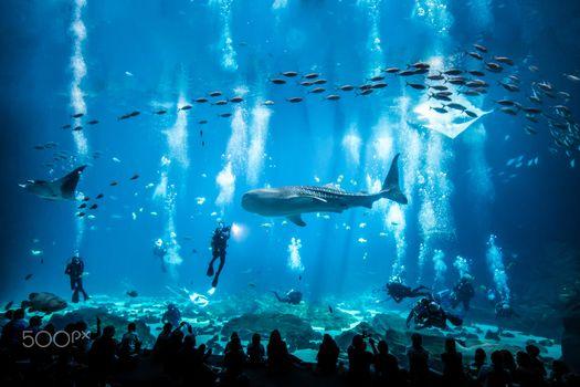 Заставки аквариум, рыбы, животные