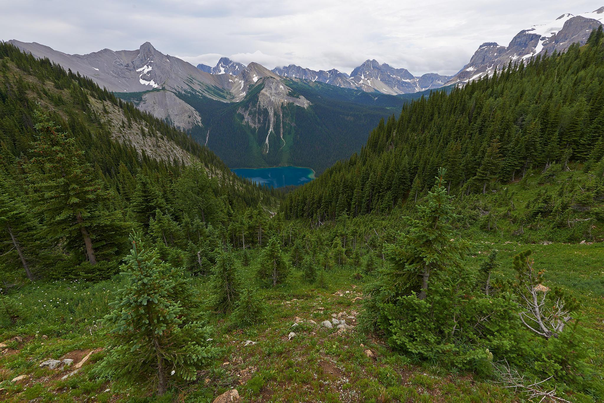 Британская Колумбия, Канада, лес