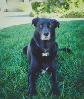 Фото бесплатно собака, трава, лежа