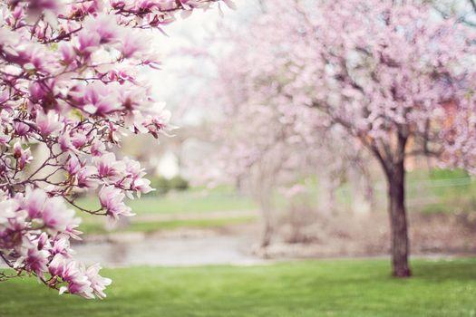 Фото бесплатно природа, ветвь, вишни