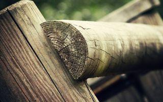 Photo free nature, wood, closeup