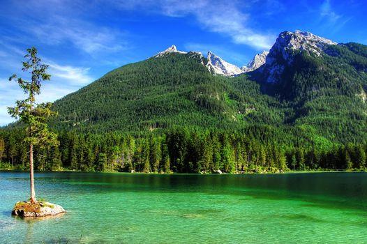 Заставки panorama, trees, Priroda