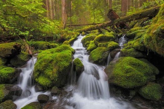 Бесплатные фото Olympic National Park,Port Angeles,United States,водопад,река,мох,камни,лес,деревья,природа