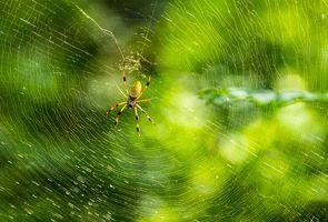 Бесплатные фото паутина,паук,насекомое,макро