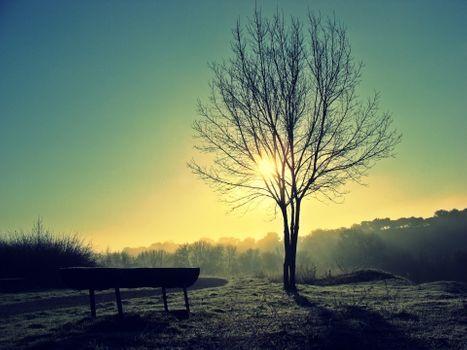 Фото бесплатно дерево, солнечный свет, одинокий