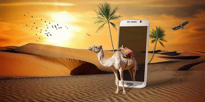 Фото бесплатно пустыня, пальмы, закат