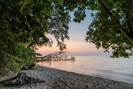 Фото бесплатно песок, берег, ветки деревьев